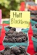 Hull Blackberry