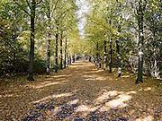 Herfst in Den Haag, pad bedenkt met gevallen bladeren. - Autumn in The Hague, path covered with leaves.