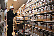 CIMMYT: The International Maize and Wheat Improvement Center outside Mexico City, Mexico has a huge concrete refrigerated gene bank with thousands of corn seed samples. Here, Jaime Diaz collects jars of seed. This is the largest such Germplasm bank in the world..Near Mexico City. .