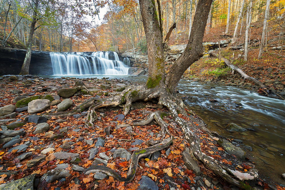 Large tree roots define the base of Brush Creek Falls at Brush Creek Preserve in West Virginia.