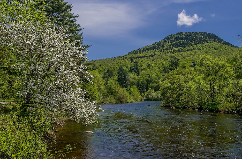 Upper Ammonoosuc River, with apple tree in bloom and mountain views, Stark, NH