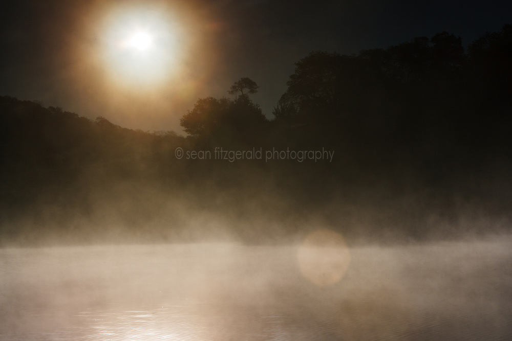 Morning fog on spring-fed pond and hillside at sunrise, Hill Country between Blanco and Fredericksburg, Texas, USA