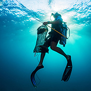 Commercial fisherman Andres Maldonado rises to the surface with a bag of lionfish after spearing several of the invasive species off Cabo Rojo, Puerto Rico. He noticed drastic and obvious declines in fish numbers and habitat availbale after Hurricane Maria in 2017 which put many other commercial fisherman out of business. Lionfish eat native fish and contribute to fish declines. Image release available.