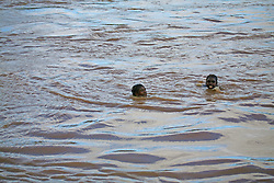 Local kids swim in the Fitzroy River to cool off in the wet season.