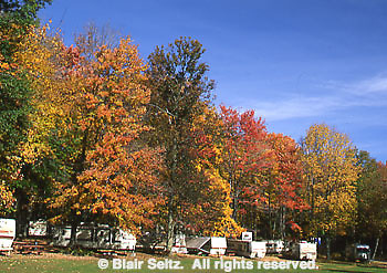 Gifford Pinchot State Park, York Co., PA