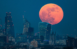 © Licensed to London News Pictures. 31/01/2018. London, UK. A  full blue supermoon kisses the top of 20 Fenchurch Street, known as the Walkie-Talkie bulding, as it rises over central London. Two full moons in the same calendar month is also know as a blue moon. Photo credit: Peter Macdiarmid/LNP