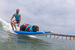 July 29, 2017 - Imperial Beach, CA, US - Surfdog returns to Imperial Beach for the twelfth  year...Koa and Lee surfing. (Credit Image: © Daren Fentiman via ZUMA Wire)