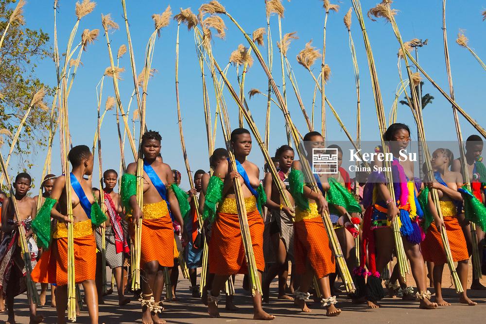 Swazi girls carrying reeds parade at Umhlanga (Reed Dance Festival), Swaziland