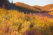 Spring wildflowers along Highway 60 (Superstition Highway), Tonto National Forest, East of Phoenix, Arizona.