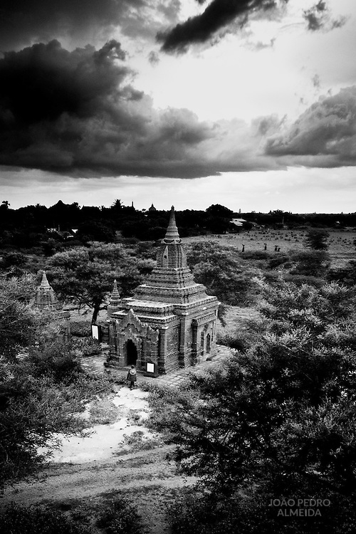 Sheperd and its herd outside a smaller bagan temple