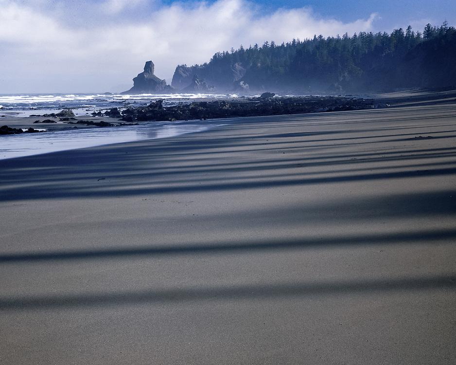 Forest shadows on beach, morning light, Pacific Coast, Olympic National Park, Washington, USA