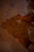 Sao Goncalo do Rio Preto_MG, Brasil...Parque Estadual do Rio Preto, em Sao Goncalo do Rio Preto, Minas Gerais. Na foto reflexo de um homem na agua...The Rio Preto State Park, in Sao Goncalo do Rio Preto, Minas Gerais. In this photo a man reflex on the water...Foto: LEO DRUMOND / NITRO.