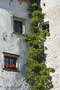 Window flower box, afternoon light, October, Castello Presule, Province of Bolzano-Bozen, South Tyrol, Italy
