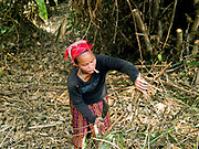 A woman smoking a homemade cigarette, clears land for growing banana trees in the recently temporarily relocated Laoseng ethnic minority village of Ban Phouxoum. Ban Phouxoum will be joined with three other Laoseng villages following the construction of the Nam Ou Cascade Hydropower Project Dam 6.