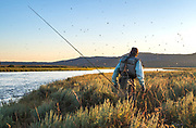 Mid July brings on the caddis hatches on the Ranch section of Idaho's Henry's Fork.