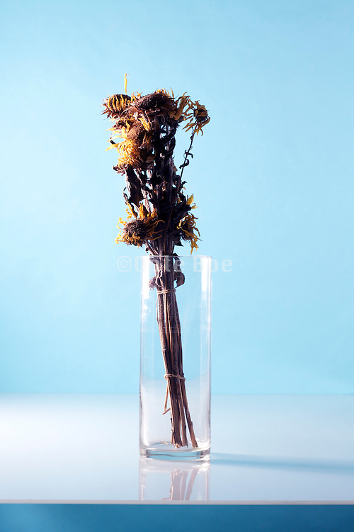 still life with bundled up dried sunflower heads