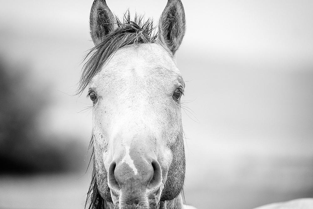 An inquisitive horse.