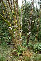 Willapa Bay National Wildlife Refuge, Washington.