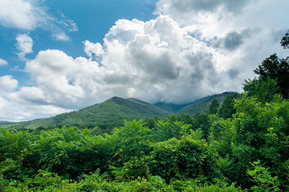 Mount Le Conte shrouded in a cloud at the Carlos Campbell Overlook in Great Smoky Mountains National Park in Gatlinburg, Tennessee on Thursday, August 13, 2020. Copyright 2020 Jason Barnette