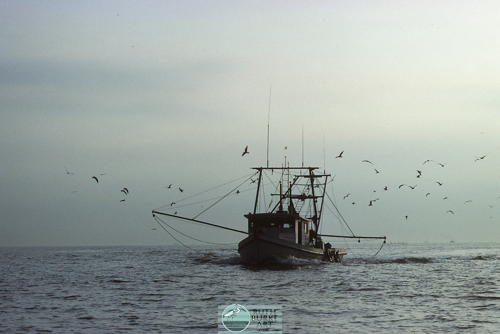 Working fishing boats for catching Gulf Coast shrimp, red snapper,flounder,oysters and crabs. Colorful picturesque seascape scenes on the water and in the harbor.