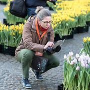 NLD/Amsterdam/20190119 - Nationale Tulpendag 2019, doop tulp Quinty Trustfull, dame die tulpen fotografeert