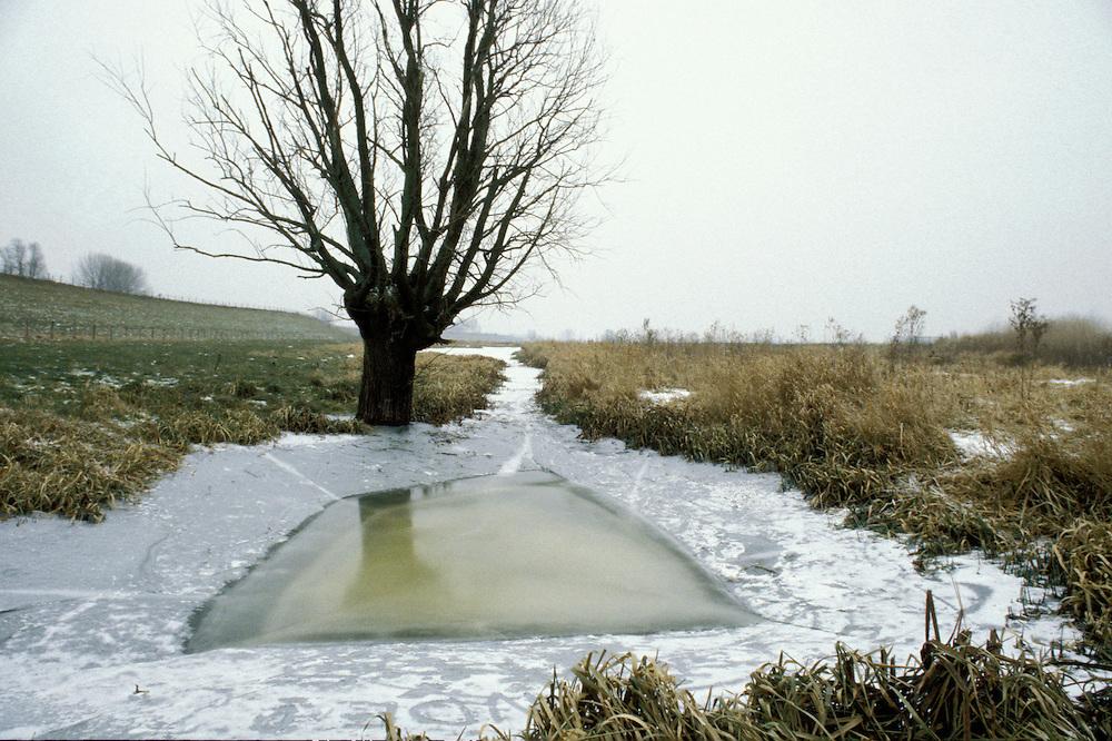 Nederland, Nabij Wijk bij Duurstede..Wilg in uiterwaarde met ijs op water. Dit beeld is er ook, nagenoeg hetzelfde in  zomersfeer...Foto (c) Michiel Wijnbergh/Hollandse Hoogte