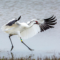 2016 Protecting Whooping Cranes