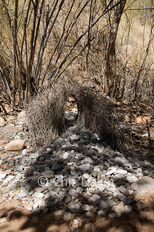"""Bower Bird """"Bower"""" near Mini Palms Gorge Bungle Bungles (Purnululu National Park), - the male spends ages constructing these structures to entice a female. However, they are solely for courtship and are not nests - the female constucts a nest for raising chicks after mating takes place."""