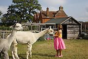 Charlotte, 6, feeding the alpacas at Hares Farm. CREDIT: Vanessa Berberian for The Wall Street Journal<br /> UKFARM-Hares Farm