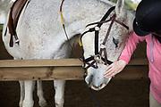 Mature women petting horse