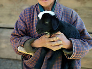 Sheep farmer, Bago holds a small lamb at his sheep farm in Chubja, Bhutan. With the easy availability of commercially processed wool and other alternatives for fabric for weaving, and the lack of human resources to look after the sheep, farming of sheep has gradually been in decline in Bhutan.