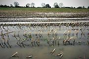 Nederland, Gramsbergen, 6-11-2013Een ondergelopen akker als gevolg van het slechte weer van de afgelopen dagen.Foto: Flip Franssen/Hollandse Hoogte