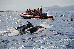 Wal Beobachtungsboot mit Delphinen, Stenella frontalis, whale watching boat with dolphins, Azoren, Portugal, Atlantik, Atlantischer Ozean, Azores, Portugal, Atlantic Ocean