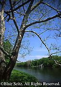 Conodoguinet Creek, Cumberland Co., PA