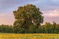 https://Duncan.co/tree-in-a-field