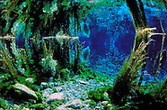 New Zealand Freshwater - Lakes, Springs & Rivers