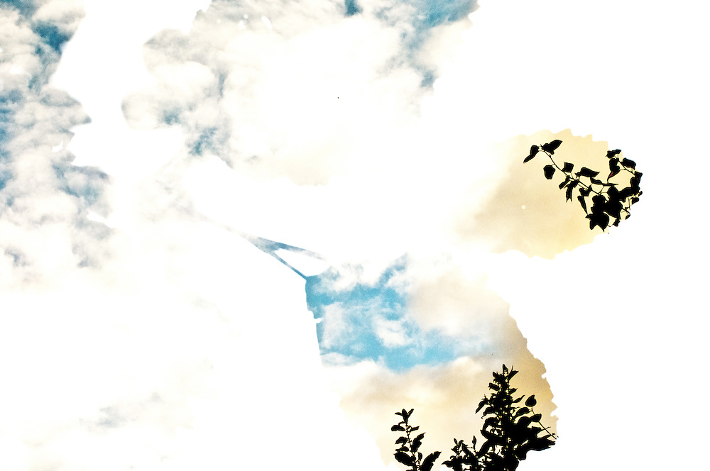 A multiple exposure image of alder and the sky.
