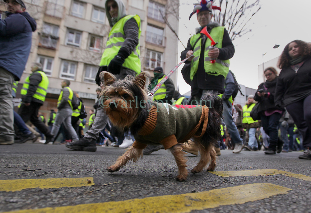 19 January 2019. Paris, France.<br /> Gilets Jaunes - Acte X take to the streets of Paris. A man and his dog join the march. An estimated 7,000 people took part in the looping 14 km route from Place des Invalides to protest tax hikes from the Government of Emmanuel Macron imposed on the people. An estimated 80,000 people took part in protests across the country. Regrettably the movement has attracted a violent element of agitators who often face off with riot police at the end of the marches which tends to deflect attention away from the message of the vast majority of peaceful protesters.<br /> Photo©; Charlie Varley/varleypix.com