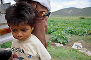 IXMIQUILPAN, HIDALGO, MEXICO: A boy with his father in a squash field near the town of Ixmiquilpan, state of  Hidalgo, central Mexico. PHOTO BY JACK KURTZ   AGRICULTURE  FAMILY  LABOUR  CHILD LABOUR  FOOD