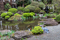 Jiunji Temple Pond Garden - Jiunji Temple is blessed with a variety of growth: pine, cherry blossoms as well as a dry rock garden and moss which highlights each season. Gardeners are brought in from Kyoto to maintain the trees and the garden.  But besides all that, adjacent to the temple and garden is a huge pine tree that was planted in the 16th century by the zen monk Tenkei.  Jiunji is surrounded by gardens - not only one garden, but  an array of gardens, zen, moss and a pond garden behind the main hall.