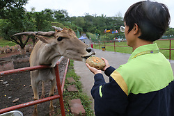 October 4, 2017 - Chongqing, Chongqing, China - Chongqing,CHINA-4th October 2017: (EDITORIAL USE ONLY. CHINA OUT)..Animals including parrots, lemurs and rhinoceros eat special mooncakes at a zoo in southwest China's Chongqing. The mooncakes for animals are made of carrots, pumpkins and apples. (Credit Image: © SIPA Asia via ZUMA Wire)