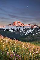 Mount Baker seen from wildflowers meadows on Skyline Divide, Mount Baker Wilderness North Cascades Washington