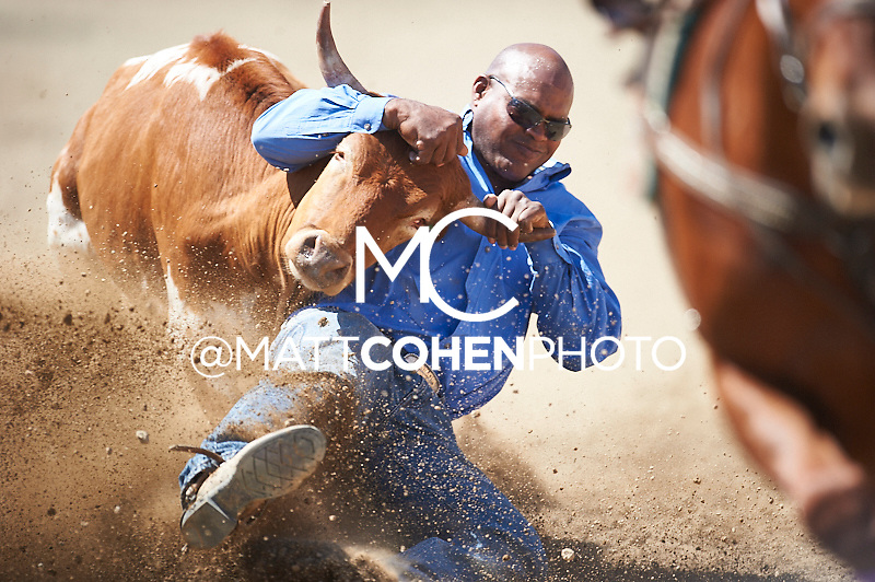 Steer wrestler Tommy Cook of McAlester, OK competes at the Redding Rodeo in Redding, CA<br /> <br /> <br /> UNEDITED LOW-RES PREVIEW<br /> <br /> <br /> File shown may be an unedited low resolution version used as a proof only. All prints are 100% guaranteed for quality. Sizes 8x10+ come with a version for personal social media. I am currently not selling downloads for commercial/brand use.