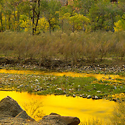 The Virgin River seems to glow with moltren gold in Zion Canyon, Zion National park, UT.