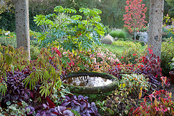 Species begonias growing under the pergola at John Massey's garden in autumn with Melianthus major. Circular stone pond and fountain.
