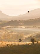 Fog in fields in Ronda, Spain