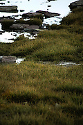 Grass in the valley below the base of Mount Clements at Logan Pass, Glacier National Park, Montana, Tuesday, October 7, 2014. According to Dan Fagre Ph.D. of the USGS receding glaciers in the park means that streams dry up in late summer and fall and that without the water available from melting ice in the late summer a lot of grasses will dry up and be less nutritious.