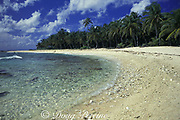beach and coconut palm trees on Half Moon Caye Natural Monument, on the barrier reef of Lighthouse Reef Atoll, Belize, Central America ( Caribbean Sea )