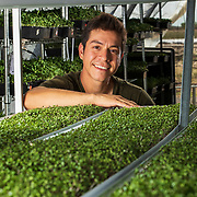 Roberto Meza, co-founder of Emerald Gardens, produces microgreen for Denver area restaurants in Bennett, Colorado. Meza learned how to grow microgreens after watching Youtube videos three years ago and has found a high-value market chefs were looking for. Nathan Lambrecht/Journal Communications