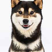 20210320-21 TCOTC Dog Portraits